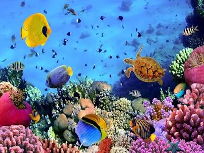 海洋海底世界
