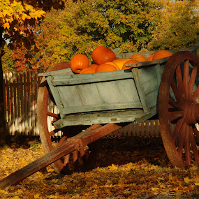 Pumpkin Cart by Stephanie Turner - Nature Up Close Gardens & Produce (  )