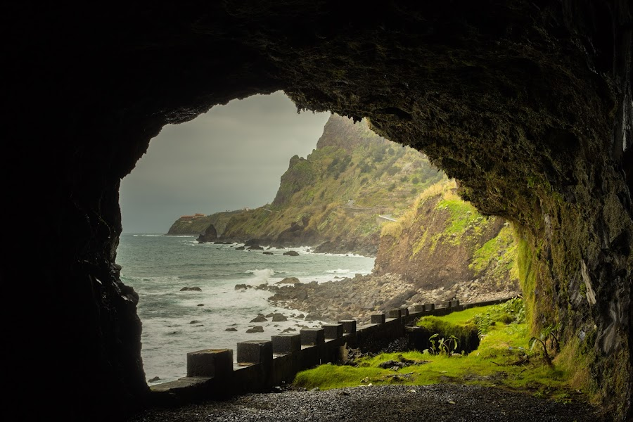 by Pedro Fernandes - Landscapes Caves & Formations ( forests, earthly, relax, jade, green, mood, ocean, scenic, relaxing, revive, tranquil, madeira island, nature, emotions, trees, meditation, tranquility, portugal )
