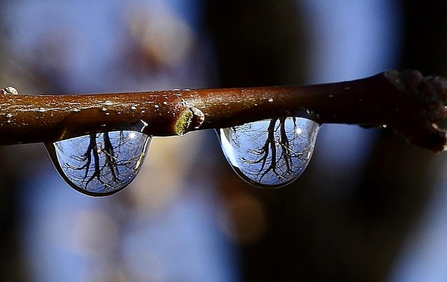 Ran drop by Denton Thaves - Nature Up Close Natural Waterdrops ( rain drops )