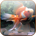 Koi Fish Wallpapers HD icon