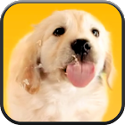 Puppy Licks Screen icon