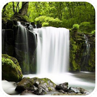 Relax Forest - Nature sounds 3.2.3
