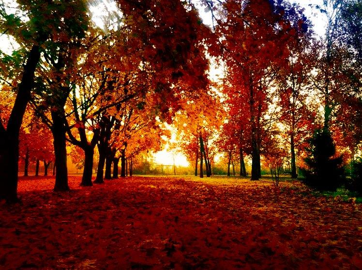 Red Alley by Nat Bolfan-Stosic - Uncategorized All Uncategorized ( red, bright, autumn, leaves, alley )
