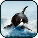 Killer Whale Live Wallpaper