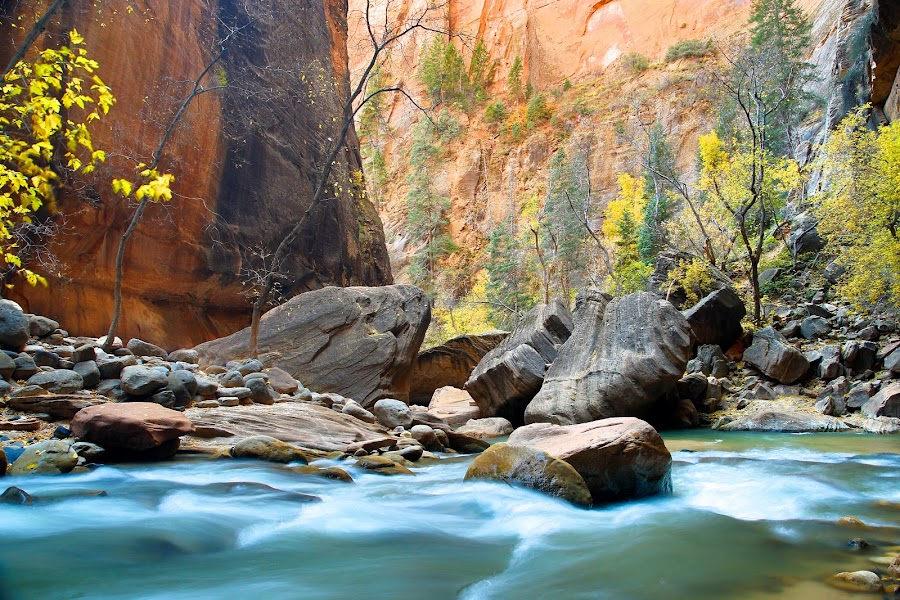 Zion River by Dean Mayo - Landscapes Waterscapes ( water, zion national park, utah, narrows, rocks, river )