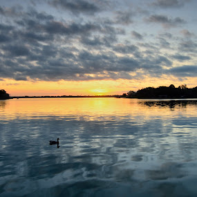 duck watching sunrise by Phil Olson - Landscapes Waterscapes ( clouds, reflection, waterscape, duck, lake, sunrise,  )