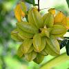 Carambola . Star Fruit