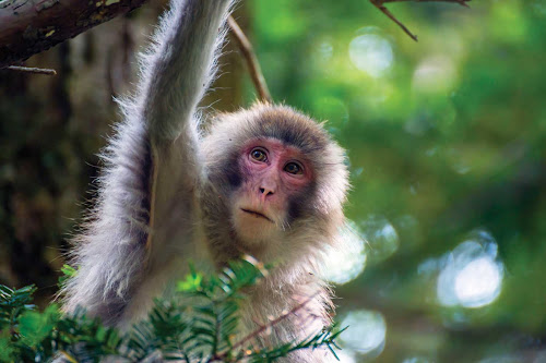 A monkey in Sandakan, on the eastern side of Borneo, spotted during a Silver Discoverer shore expedition.