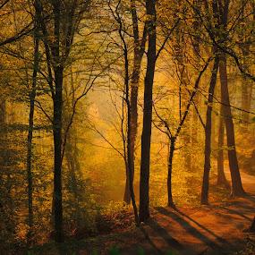 by Ksenija Bauer - Landscapes Forests
