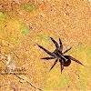 Spider-unidentifed