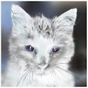 Animal Tap logo