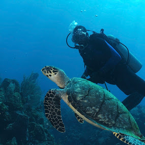 Diver and Hawksbill sea turtle  by David Gilchrist - Animals Reptiles ( diver, roatan marine park, aquatic, hawksbill sea turtle, underwater, eretmochelys imbricata, reptile, turtle,  )