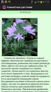 Комнатные растения Премиум