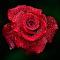 _DSC3290_Pixoto.jpg