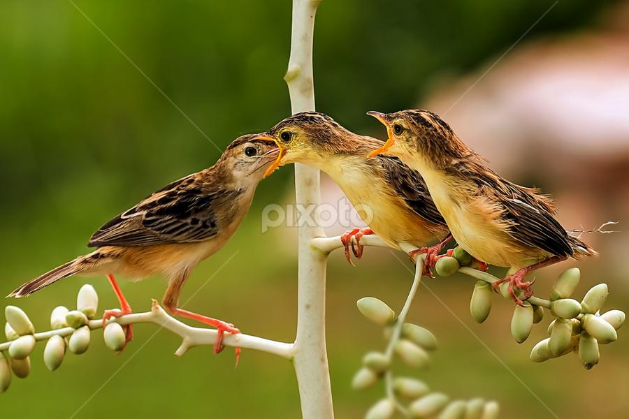 Full Inside by Husada Loy - Animals Birds