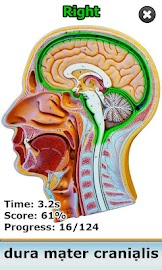 Anatomy Star - CNS (the Brain) Screenshot 2