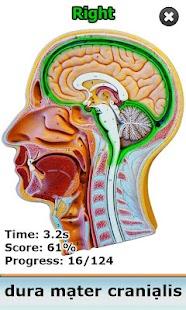 Anatomy Star - CNS (the Brain)- screenshot