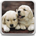 Puppies Live Wallpaper icon