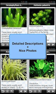 Aquarium Plants Encyclopedia