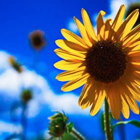 God's Beauty by Charles Saunders - Novices Only Flowers & Plants ( colorodo, sunflower, springs, beauty, garden of the gods )