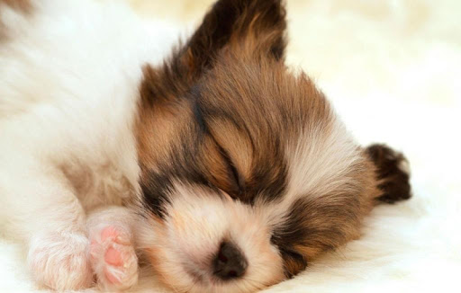 Sleeping Cute Animal Wallpaper