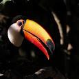 2013 Best Wildlife Photo