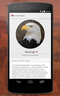 Birdlife of North America Free Screenshot 2