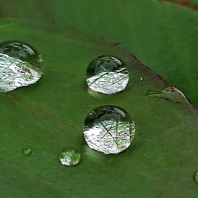 by Muhammad Amin Zia - Nature Up Close Natural Waterdrops