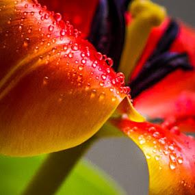 by Sarah King - Flowers Single Flower
