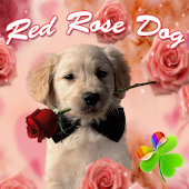 Red Rose Dog Theme GO Launcher