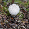 Gem studded puffball