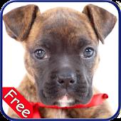 Boxer+ Free