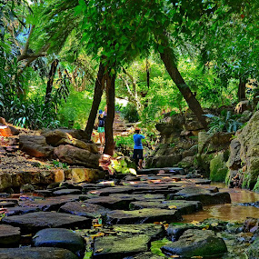 Kirstenbosch Gardens by Glenn Visser - Nature Up Close Trees & Bushes ( kirstenbosch, gardens, cape town, renewal, green, trees, forests, nature, natural, scenic, relaxing, meditation, the mood factory, mood, emotions, jade, revive, inspirational, earthly )