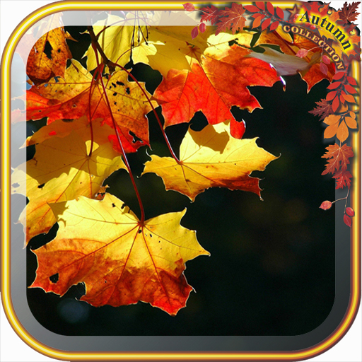 Beauty Autumn Live Wallpaper