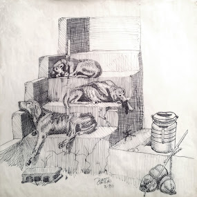 Three Sleeping Dogs by Tom Carson - Drawing All Drawing ( 3, sketch, stairs, dogs, coconuts, three, sleeping, milk can, steps, mutt, skinny )
