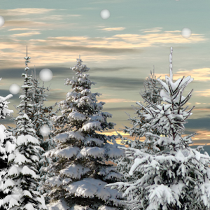 Winter Snow Trees 3D LWP 個人化 App LOGO-APP試玩