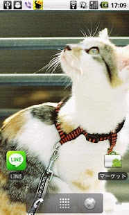 Cats Charity Live Wallpaper- screenshot thumbnail