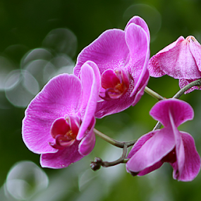 orchid by Dodi Yoga - Flowers Flower Gardens ( deemozart, colorful, mood factory, vibrant, happiness, January, moods, emotions, inspiration )