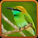 Bird Sound Ringtone icon