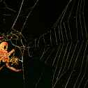 Six-legged Spider
