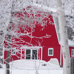frosty morning on the farm by Carol Keskitalo - Buildings & Architecture Other Exteriors ( winter, snow, frost, barns,  )