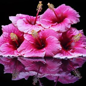 flowers by Pravin Dabhade - Flowers Flower Arangements ( canon, nature, relection, closeup, arrangements, flower )