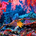 Coral Reef Wallpaper icon