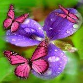 Flower & Colorful Butterflies