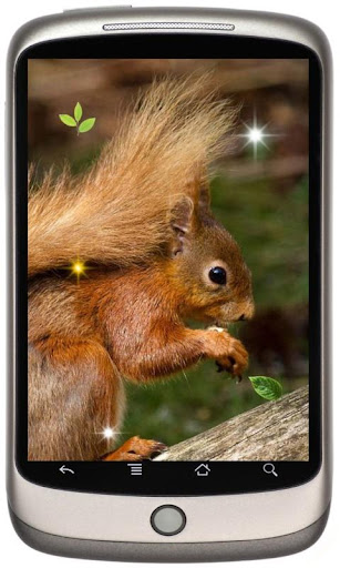 Squirrel Photo Gallery LWP
