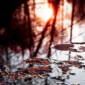 Evening falls by Andra Soceanu - Nature Up Close Leaves & Grasses ( fall leaves on ground, fall leaves )