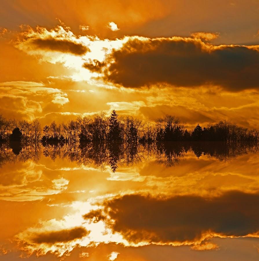 golden sunset by Jay Anderson - Landscapes Sunsets & Sunrises ( sunset, trees, lake, nikon, refection, sun, golden, , color, colors, landscape, portrait, object, filter forge )
