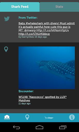 Whale Shark Network Maldives