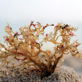 by Wibi Prayogo - Nature Up Close Other Natural Objects
